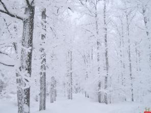 natural-white-snow-jungle